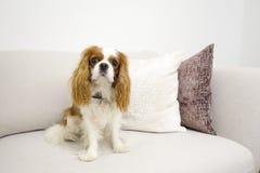 Welpe, der auf Couch sitzt Lizenzfreies Stockfoto