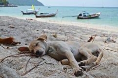 Welpe, der auf dem Strand schläft Lizenzfreie Stockbilder