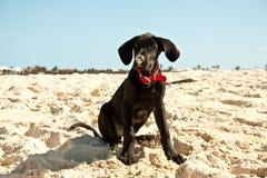 Welpe, der auf dem Strand sitzt Stockfoto
