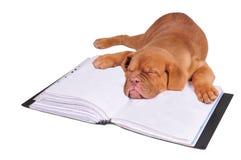 Welpe, der auf einem Dokumentenfaltblatt schläft lizenzfreie stockbilder