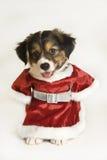 Welpe, der eine Weihnachtsmann-Ausstattung trägt Stockbild