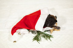Welpe, der in einem Weihnachtsmann-Hut liegt stockfotografie
