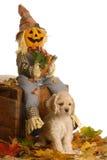 Welpe in der Halloween-Szene Lizenzfreies Stockfoto
