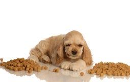 Welpe, der Hundenahrung isst Lizenzfreies Stockfoto