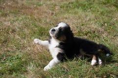 Welpe, der im Gras ein Sonnenbad nimmt Lizenzfreies Stockfoto