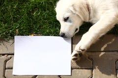 Welpe, der Mitteilung auf leerem Papier liefert Stockbild