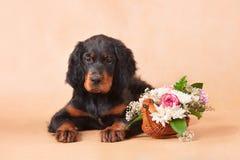 Welpe des Setzers mit Blumen Stockfotografie