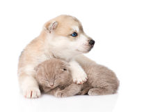 Welpe des sibirischen Huskys, der schottisches Kätzchen Schlafens umarmt Getrennt Stockfoto