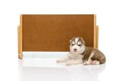 Welpe des sibirischen Huskys mit Fahne lizenzfreie stockbilder