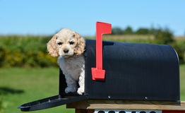 Welpe in einem Briefkasten Stockbild