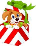 Welpe in einem Weihnachtsgeschenkkasten Stockfotos