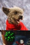 Welpe für Weihnachten Stockfotografie