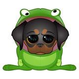 Welpe im Frosch-Kostüm Stockfoto