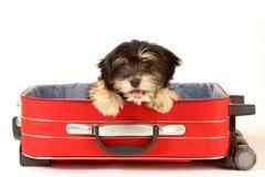 Welpe im Koffer Stockbild