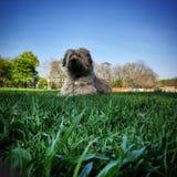 Welpe im Park stockbild