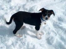 Welpe im Schnee Lizenzfreies Stockfoto