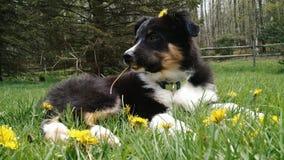 Welpe mit Blumen Lizenzfreie Stockfotografie