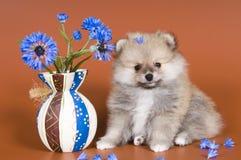 Welpe mit einem Vase Stockfotografie