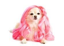 Welpe mit einer rosafarbenen Frisur Lizenzfreies Stockfoto