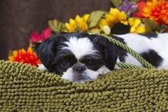 Welpe mit Herbstblumen. Stockfoto