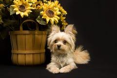 Welpe mit Sonnenblume Lizenzfreie Stockfotografie