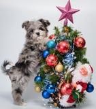 Welpe nahe Weihnachtsbaum Stockfotografie