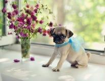 Welpe Pug Lizenzfreie Stockfotos