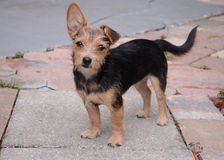 Welpe, schöner Hund Stockbild