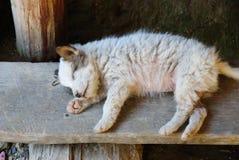 Welpe schläft auf dem hölzernen Brett Stockfotografie