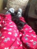 Welpe schlafend auf Beinen lizenzfreies stockbild