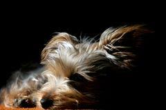 Welpe schlafend in der Leuchte u. im Schatten lizenzfreies stockfoto
