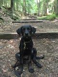 Welpe sitzt auf einem Waldweg Stockbild