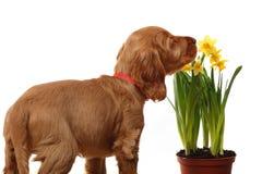 Welpe und Blumen Stockfotografie
