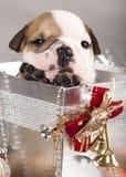 Welpe und Geschenkweihnachten Lizenzfreie Stockfotos