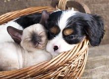 Welpe und Kätzchen Lizenzfreies Stockfoto