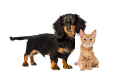 Welpe und Kätzchen lizenzfreies stockbild