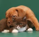 Welpe und Kätzchen. Stockfotografie