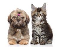 Welpe und Kätzchen auf Weiß Lizenzfreie Stockfotos