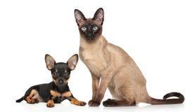 Welpe und Kätzchen auf weißem Hintergrund Lizenzfreies Stockbild
