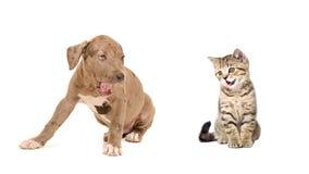 Welpe und Kätzchen gähnen zusammen Lizenzfreie Stockbilder