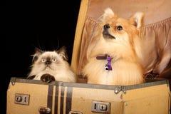 Welpe und Kätzchen im Koffer Lizenzfreie Stockbilder