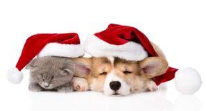 Welpe und Kätzchen Schlafens Pembroke Welsh Corgi mit rotem Sankt-Hut Getrennt Lizenzfreie Stockfotografie
