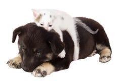 Welpe und Katze Lizenzfreies Stockbild
