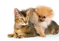 Welpe und Katze im Studio Stockbilder