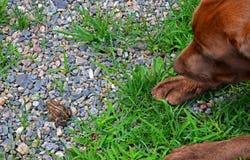 Welpe und Kröte 1 Lizenzfreie Stockbilder