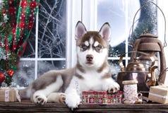 Welpe und Weihnachtsdekorationen lizenzfreie stockbilder