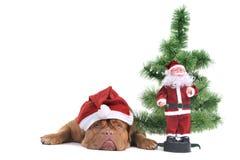 Welpe unter einem Weihnachtsbaum Stockfoto