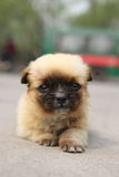 Welpe in Xian Stockfotos