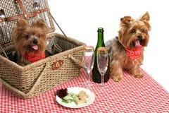Welpen auf Picknick Lizenzfreies Stockfoto