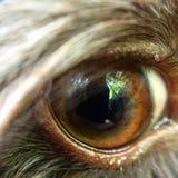 Welpen-Auge Stockfotografie